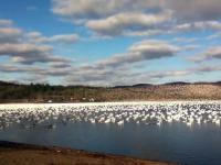 Natrafił na 10 000 ptaków i zaczął je nagrywać..