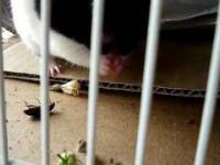 Szlachetny chomik pomaga robakowi stanąć na nogi