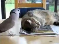 Ptaszek budzi kota