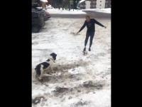 Donald Tusk kopie piłką w psa