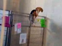 Sprytny pies ucieka ze swojego kojca