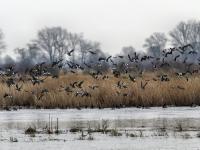 Ornitolog: ptaki pozostające na zimę to coraz powszechniejsze zjawisko