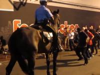 Policyjny konik w Nowym Orleanie czuje rytm