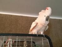 Hodowca kazał papudze wracać do klatki