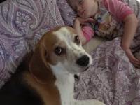 Opiekuńczy pies chce obudzić dziecko, po czym sam zasypia