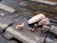 Pies znajduje sobie sam zabawę