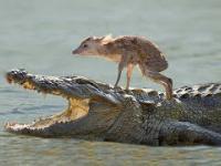 Zwierzęta ratują inne zwierzęta od pewnej śmierci