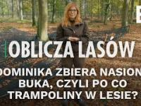 Dominika zbiera nasiona buka, czyli po co trampoliny w lesie? | Oblicza lasów 43