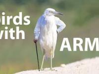 A gdyby tak ptaki miały ręce?