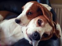 Wzruszajaca historia przyjaźni między sczeniaczkiem i starszym psem