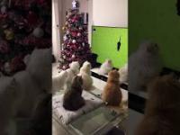 Parę kotów zostało zahipnotyzowanych