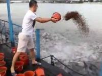 Wielki szał karmienia ryb