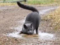 Co dzieje się z tym kotem?
