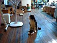 Sparaliżowany kot słyszy zbliżającego się właściciela