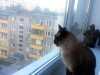 Psychotyczny kot