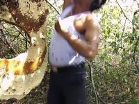 Ekstremalna pszczela kąpiel