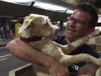 Pies szaleje ze szczęścia na widok swojego właściciela