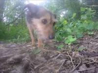 Pies porzucony w lesie został złapany w klatkę łapkę.
