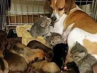 Suczka Mary zaadaptowała trzy maleńkie kotki