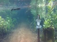 Podwodny las po wylaniu rzeki w Brazylii