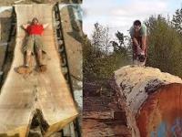 Najbardziej niesamowite piły na świecie. Obróbka drewna jako sztuka!