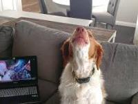 Pies nauczył się wyć z internetowych poradników