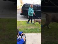 Miała posprzątać po swoim psie. Wolała jednak zwyzywać właściciela domu