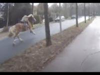 Pościg za zbiegłym koniem
