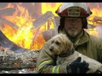Strażacy bohaterowie ratują życie zwierząt