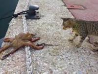 Dziwne zwierzę ale pachnie rybą...