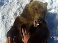 Jak skontrolować stan zębów u niedźwiedzia?