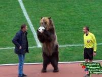Niedźwiedź podał piłkę sędziemu głównemu i bił brawo w kierunku kibiców