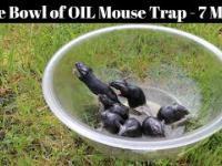 Najprostsza pułapka na myszy