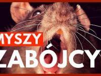 Myszy zabójcy - Nauka. To lubię.