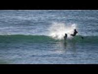 Surfer znokautowany przez delfina