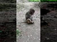 Szybki sposób na obudzenie śpiącej małpy.
