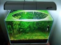 Brudne akwarium? Bez filtra i wymiany wody przez 6 miesięcy