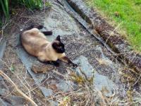 Zajączek uciekł kotu...