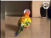 Pan Papuga.exe przestał działać