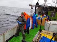 Czemu bałtyckie foki są zabijane?