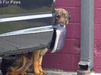 Bezdomna i wystraszona psina płacze niczym człowiek