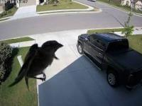 Gdy częstotliwość klatek kamery pokrywa się z częstotliwością skrzydeł ptaka...