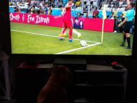 Fan piłki nożnej