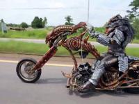 W Tajlandii sfilmowano predatora na motocyklu