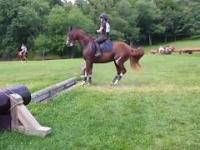 Bardzo niezdecydowany koń