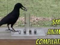 Pokaz inteligencji zwierząt