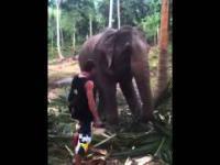 Turysta próbuje dotknąć słonia