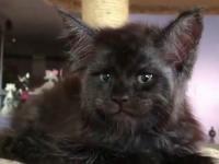 Ten kot mnie troszkę przeraża