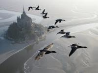 Piękno latania... wraz z ptakami