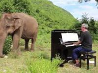 Bach zagrany na pianinie dla niewidomego słonia